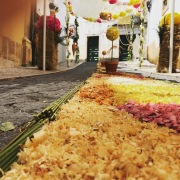Photo-tomar-fête-des-fleurs